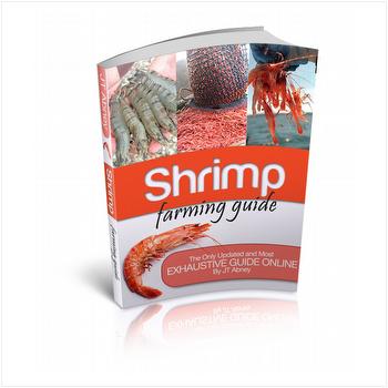 Shrimp farming business